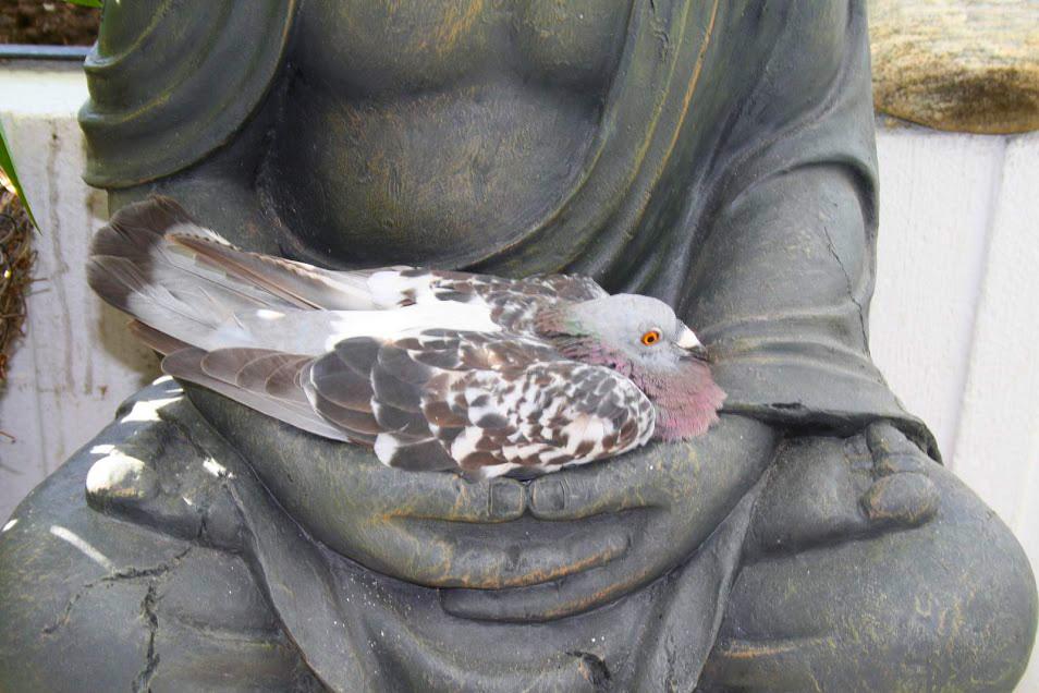 Фото дня: «Когда нашёл внутренний покой»