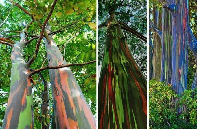 22 фотографии странных деревьев, которые похожи на фотошоп, но это не так