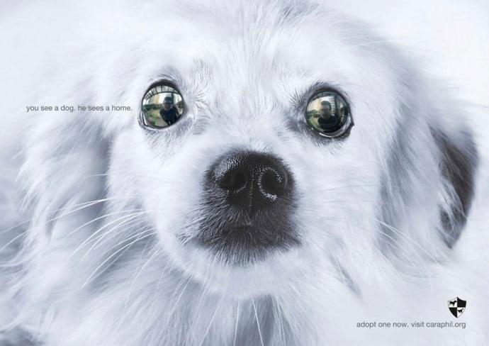 18 мощных примеров социальной рекламы про животных