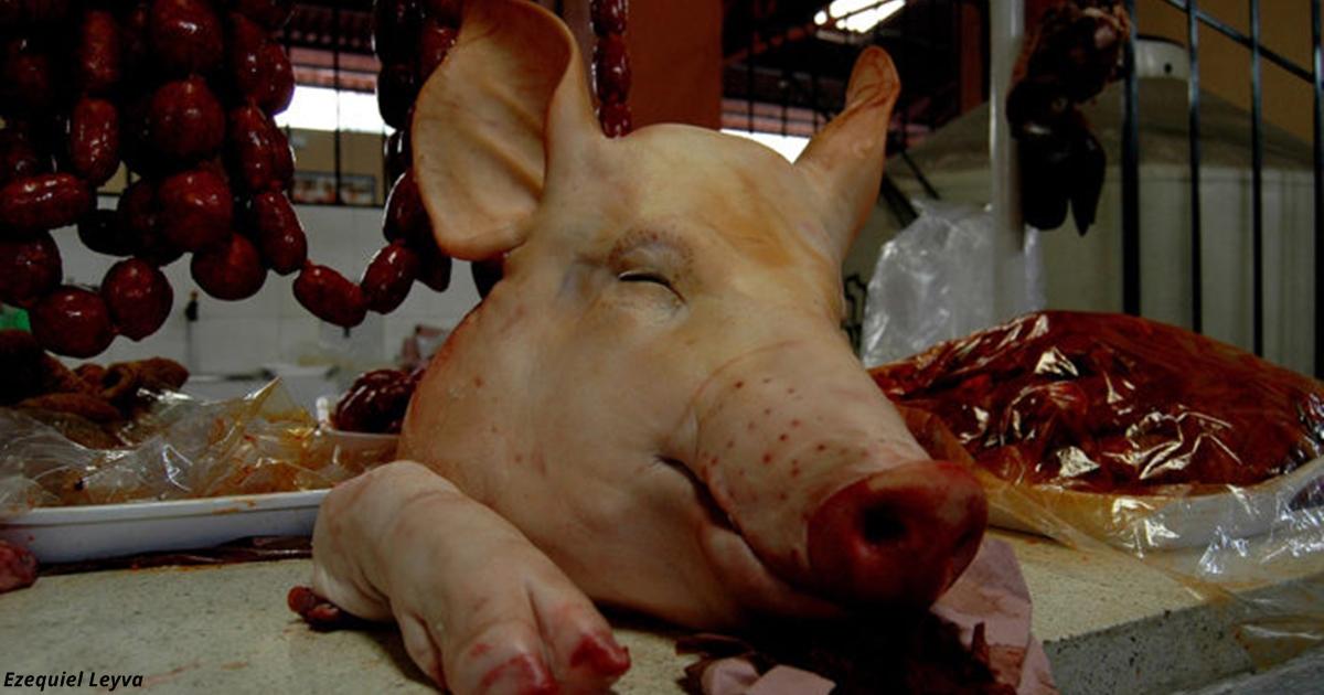 90% людей верят, что свинина вредна. Но оказалось, что это все вранье!