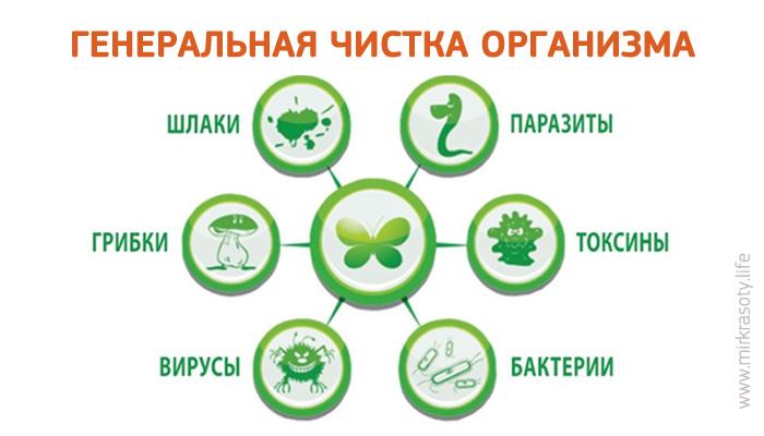 С чего начать очищение организма