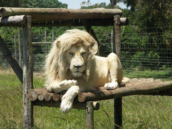 На какое животное больше всего похож ваш мужчина по Знаку Зодиака