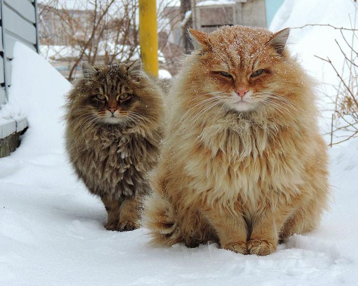 10 самых красивых кошек
