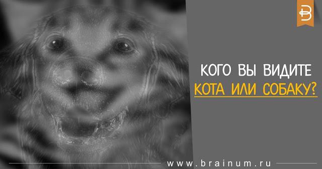 Необычный тест: Вы увидели на фото кота или собаку? Читайте, что это означает!
