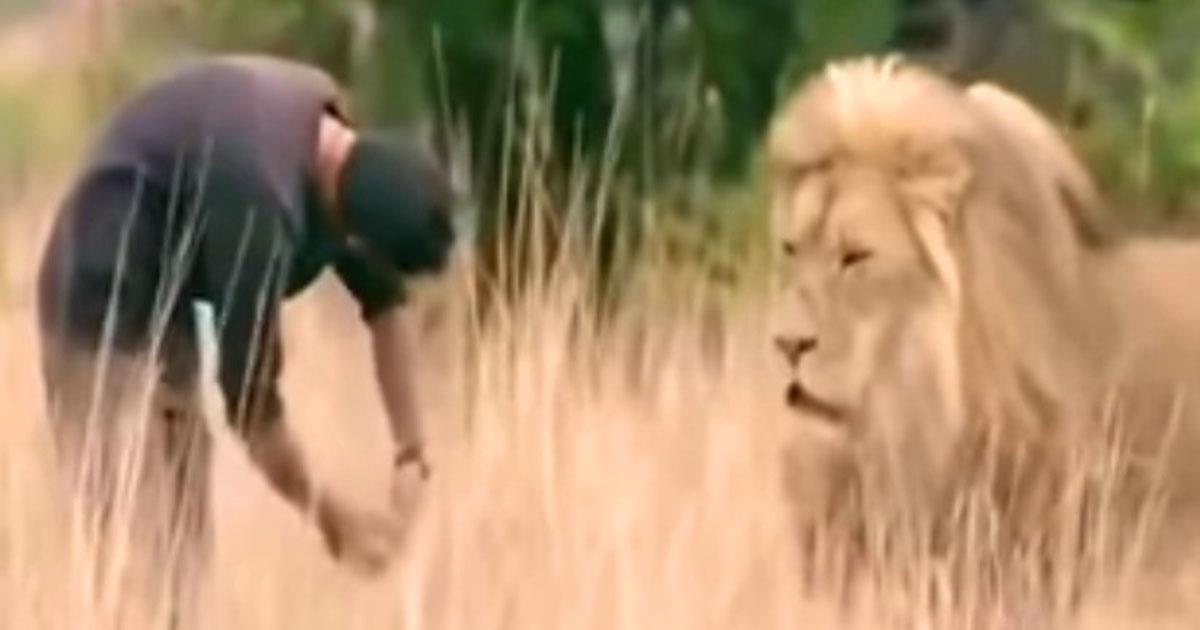 Мужчина подошел ко льву и наклонился, реакция царя зверей Вас поразит!
