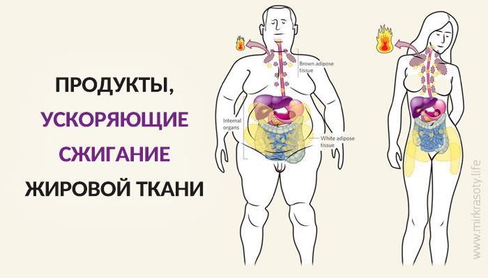 Продукты, ускоряющие сжигание жировой ткани