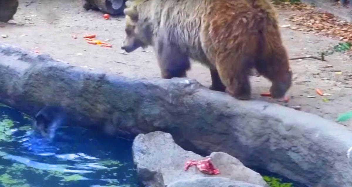 Ворона свалилась в воду и начала тонуть. То, что сделал медведь — не укладывается в голове!