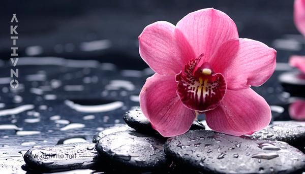 Девушки, никогда не держите дома орхидею! На работе — можно, но дома — ни в коем случае!