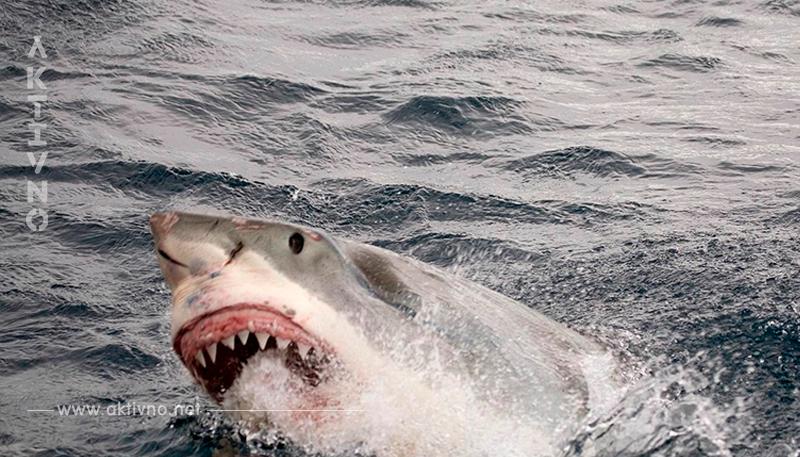Украинец в Египте спас девушку из Австрии от акулы! Вот как это было