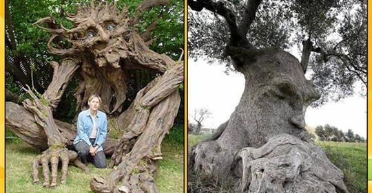 24 фантастических фото деревьев, которые выглядят словно герои сказок и мульфильмов!