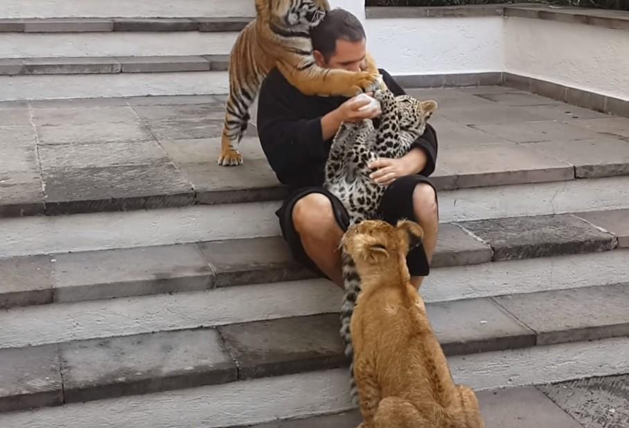Он кормил леопарда, вдруг услышал, что сзади подкрался другой хищник. Это нечто!