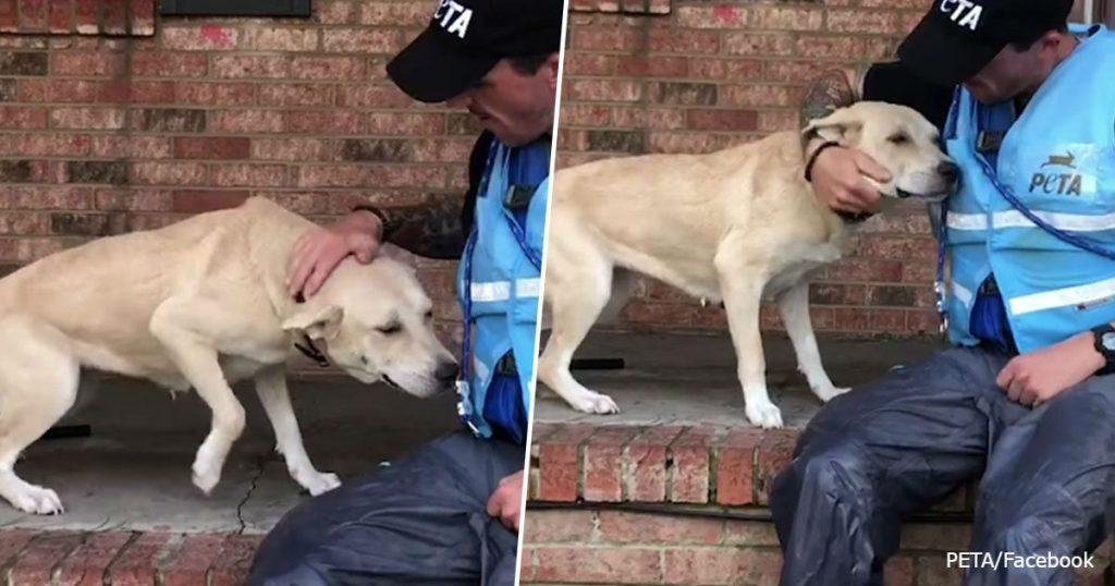 Хозяева бросили собаку во время урагана. Спасатели нашли ее испуганной на пороге затопленного дома.