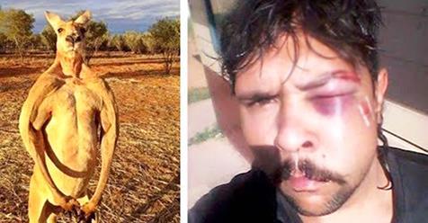 Кенгуру ударил охотника, который пытался убить его сородичей…