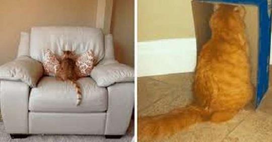 12 примеров того, как выглядит настоящая кошачья обида