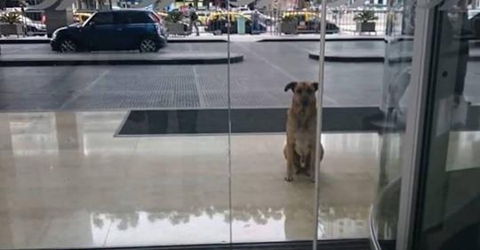 Верный пес долго ждал в аэропорту стюардессу, которая однажды приласкала его!