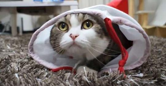Смешной кот до слёз. Видео, поднимающее настроение — море позитива!