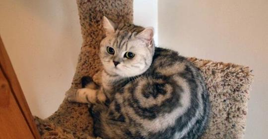 20 очень веселых фотографий котов с забавными комментариями их владельцев