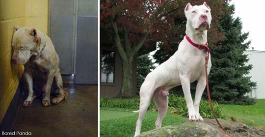 20 фото домашних животных до и после того, как их  усыновили