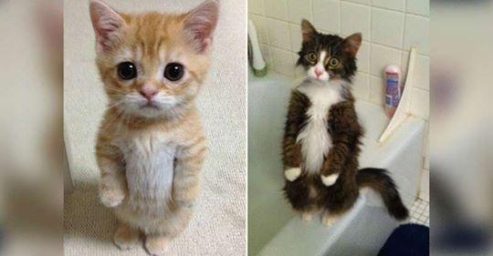 20 смешных котиков, которые умеют стоять на задних лапках