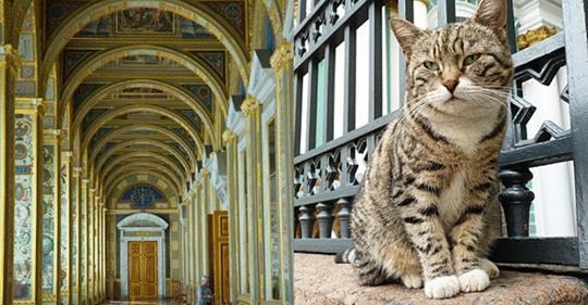 Коты Эрмитажа: Эти 74 кота живут здесь не просто так, а несут важную для государства службу!