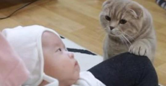 Котам показали новорожденного малыша.