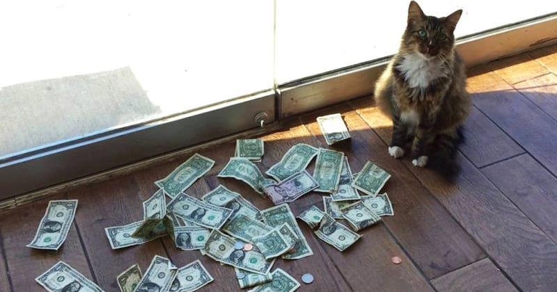Работники фирмы не понимали, откуда кот носит деньги. Но узнав правду, впали в ступор!