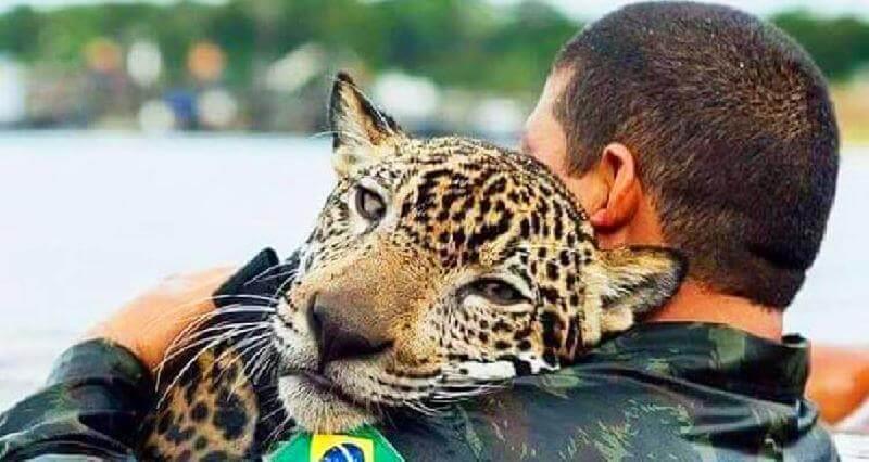 Ягуар тонул в потоке воды, внезапно он увидел рядом человека…
