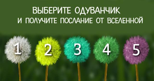 Выберите Одуванчик И Получите Послание От Вселенной!
