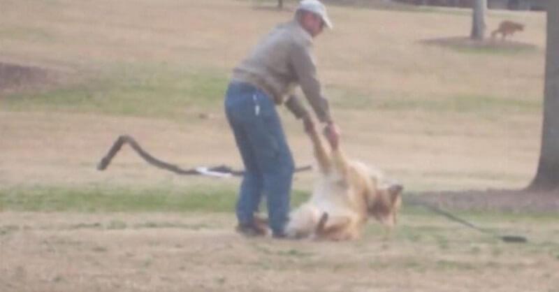 Пес не хочет идти домой. Ребята снимают в парке видео, от которого уже с 0:13 со смеху помрешь!