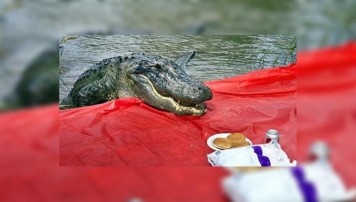 Аллигатор вылез на берег перекусить, то, что случилось потом, ШОКИРУЕТ!
