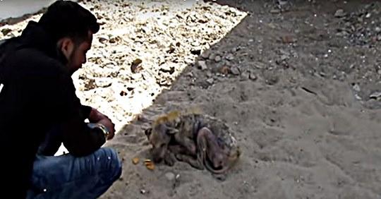 У собаки, которая уже не могла ходить, потекли слезы при виде спасателей… ВИДЕО