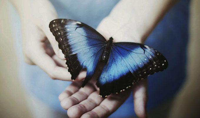 Легенда о синей бабочке