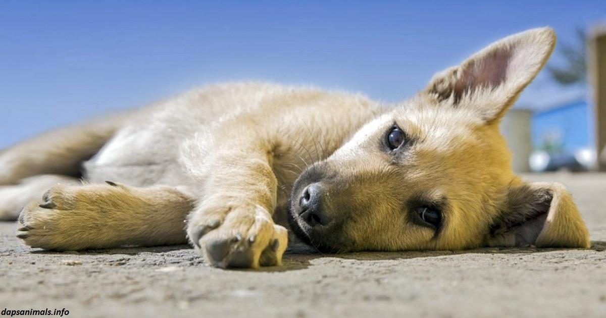 Голландия - первая в мире страна без единой бродячей собаки. Вот как им это удалось