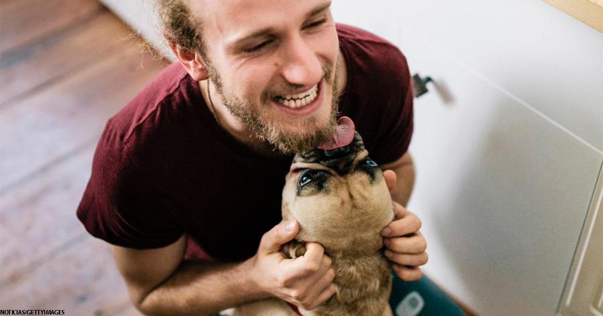 Мужчина умер после того, как его облизала собака - из-за редкой инфекции