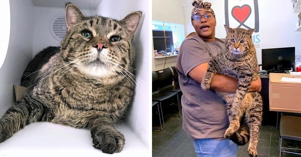 В филадельфийский приют попал кот дворняжка безумных размеров. Теперь все хотят забрать его себе