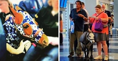 Почему в США можно перевозить пони в салоне самолёта? Где то тихонько плачет толстый кот Виктор