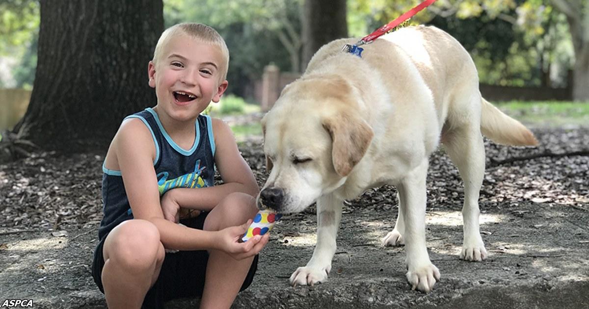 7 летнего мальчика признали «ребёнком года»: он спас 1300 собак