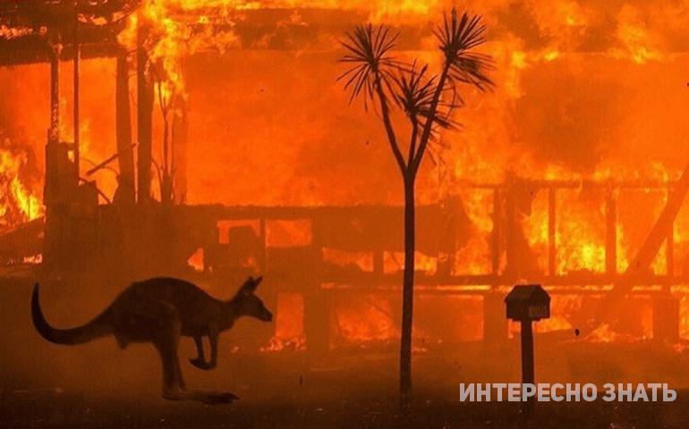 Ад на Земле: душещипательные снимки Австралии, на которые без слез не взглянешь