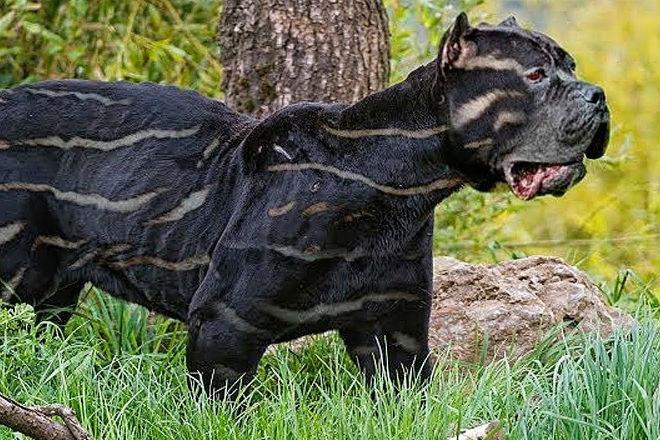 10 редчайших пород собак в мире