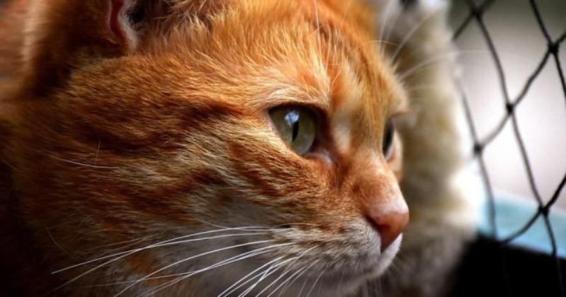 Кота, застрявшего в стене супермаркета, спасли через два года