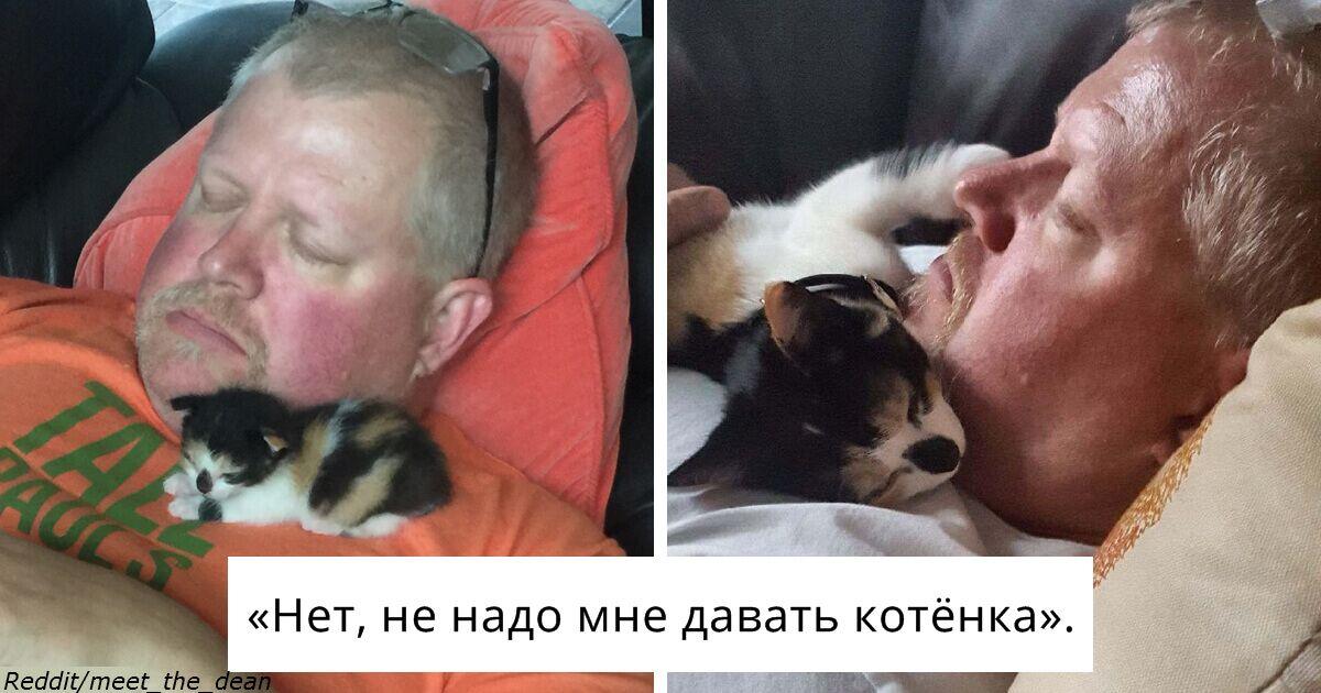Мужчины, которые говорили, что не хотят ″никаких чертовых котов″