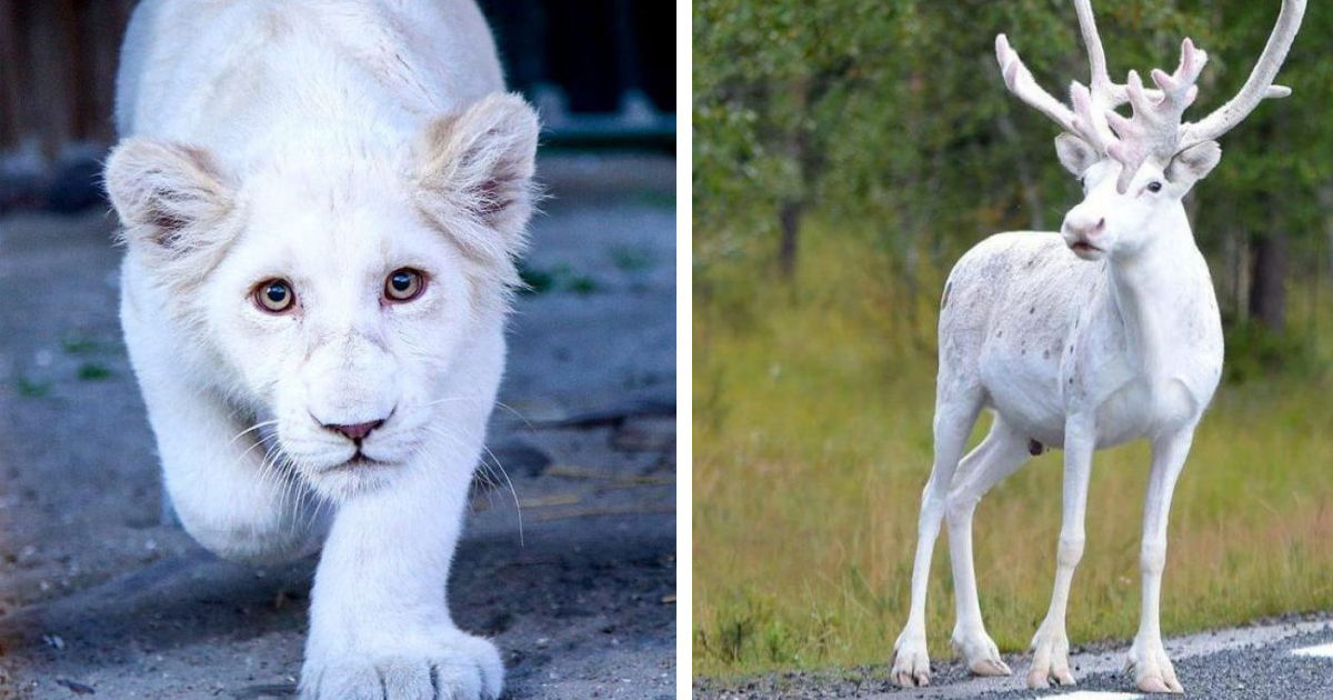 Фантастические животные альбиносы: редкие, беззащитные и великолепные
