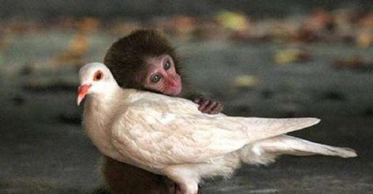 15 прекрасных кадров необычной дружбы среди животных