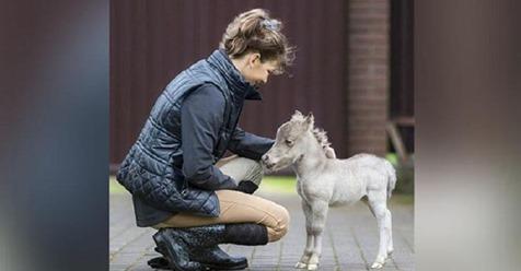 В Ленинградской области родился самый маленький конь в мире.