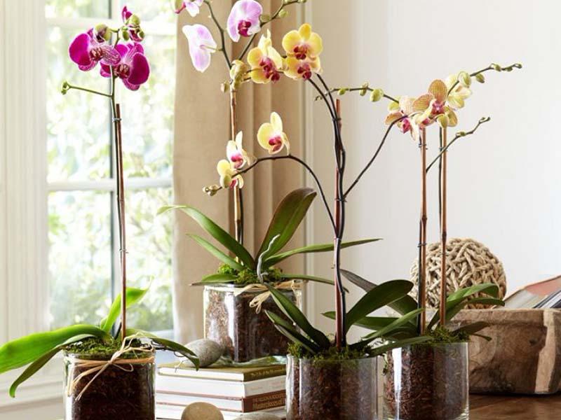 Как одну орхидею превратить в 100. Секреты рассадки цветка