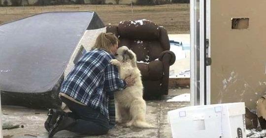 Трогательная встреча собаки со своими хозяевами, которые вынуждены были расстаться из-за торнадо