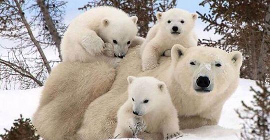 Семейные портреты диких животных — невероятно!