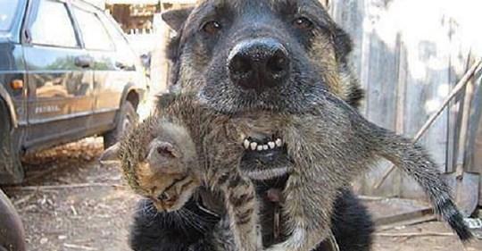 Бесстрашный пес бросился в горящее здание, чтобы спасти котят
