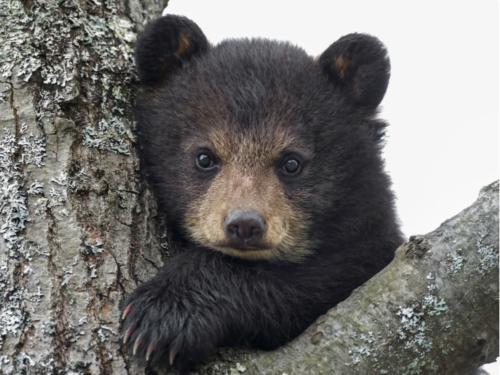 Лесник спас медвежонка. Через 5 лет он вернулся с необычной просьбой