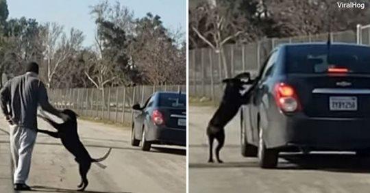 Невозможно смотреть: брошенная собака бежит за машиной, вымаливая ″прощение″